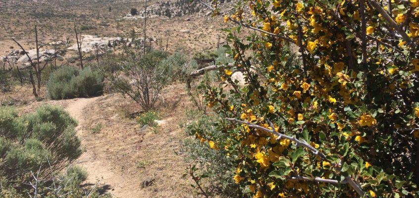 Repos et entrée dans la Sierra